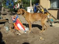 dog-on-feeding-scheme.jpg