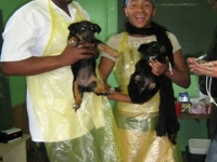 local-volunteers-spayathon-aug-2009.jpg